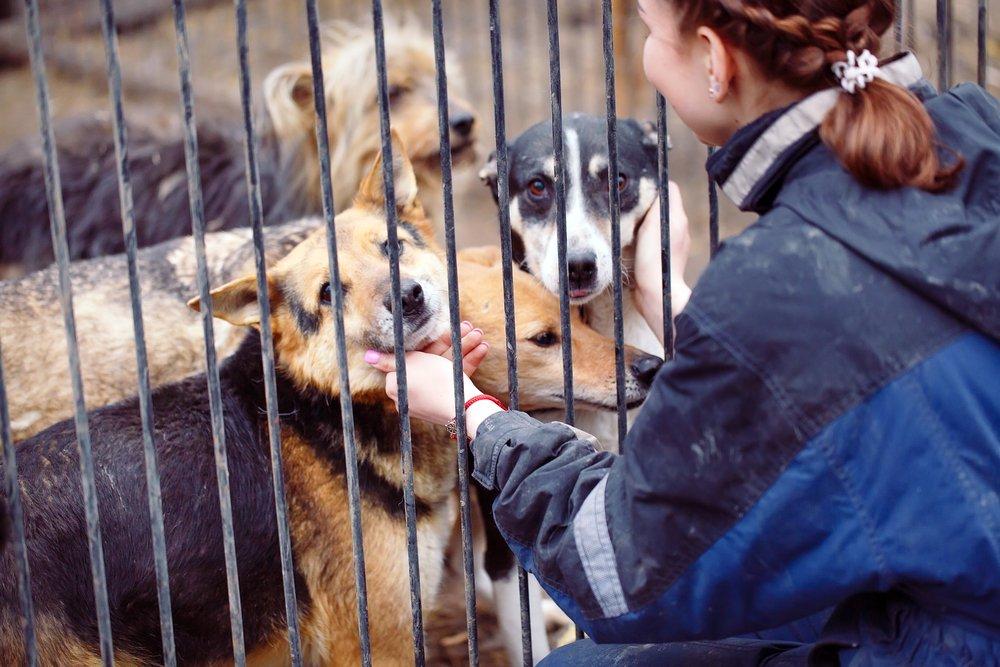 Картинки с приюта для собак