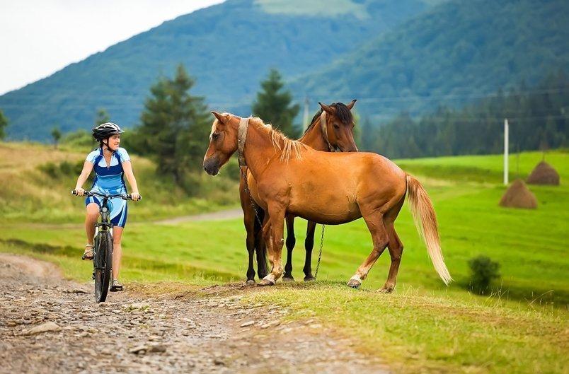 Активный отдых: кони и велосипеды