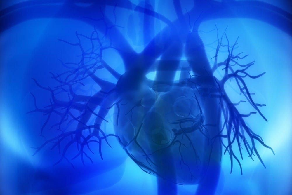 Особенности тока крови внутри сердца