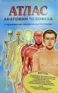 Ганьон, Мерсеро: Атлас анатомии человека