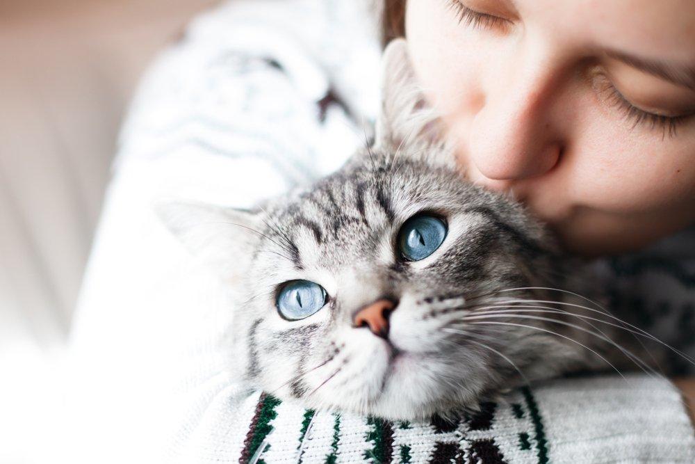 Целебное мурлыкание кошки
