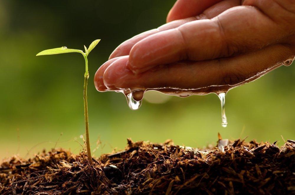 Польза семян льна для похудения и здоровья
