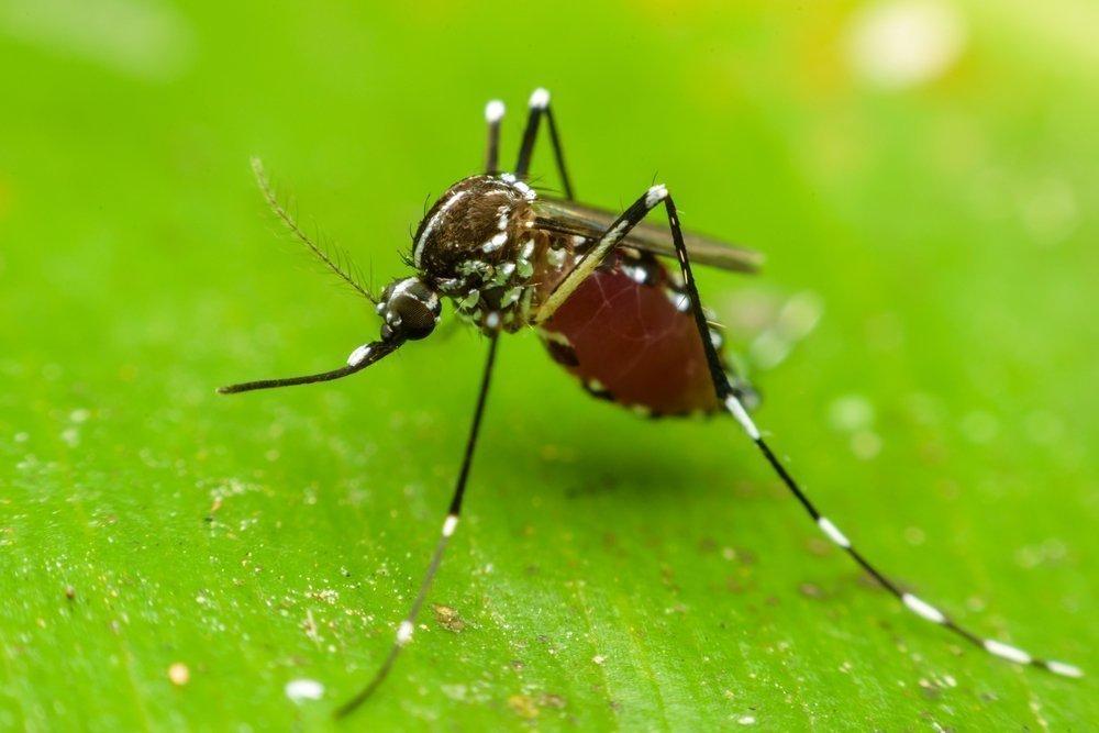 Как происходит заражение вирусом желтой лихорадки