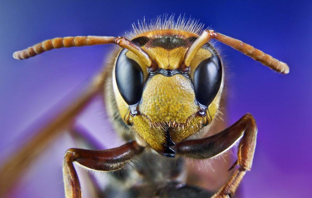 Первая помощь при укусах ос и пчел