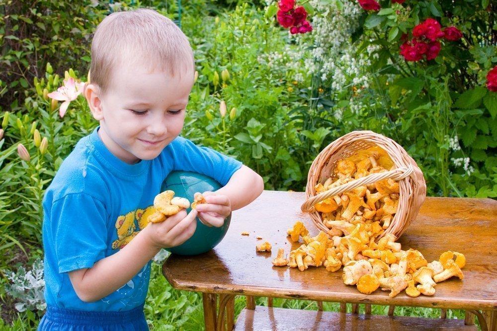 Грибы в питании детей