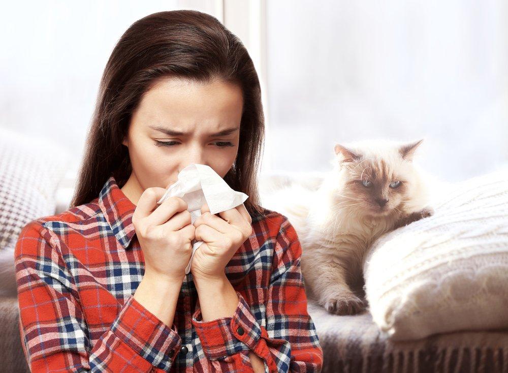Кошки и их аллергены