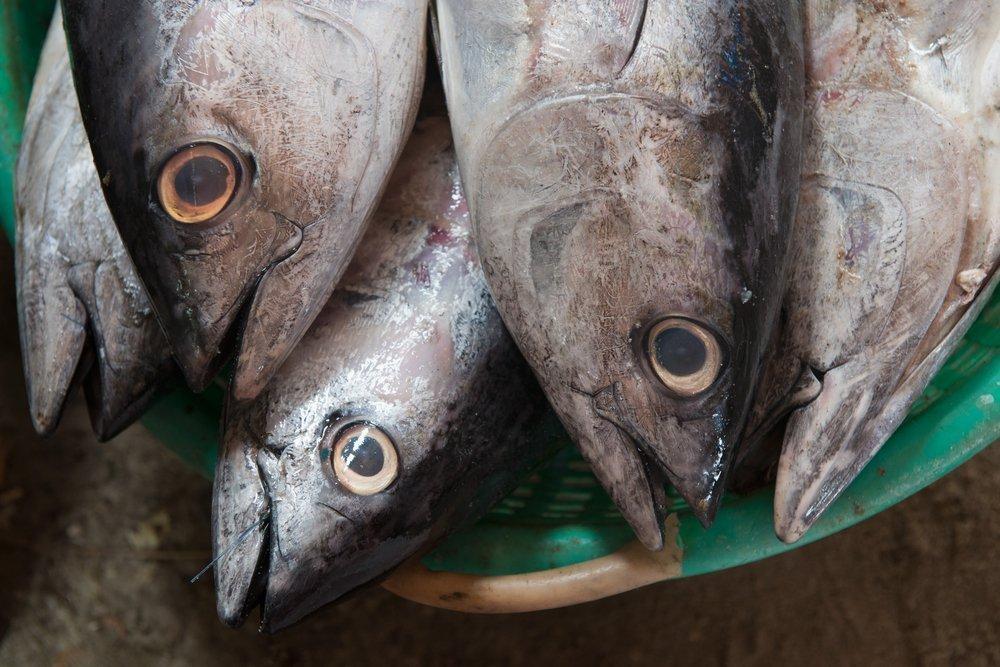Голубой тунец — вид морепродуктов, опасных для здоровья