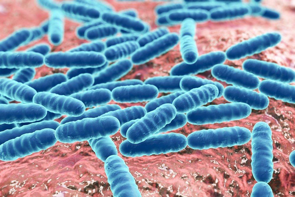 Бактерии из кишечника