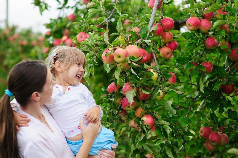 Заражение инфекциями через свежие плоды