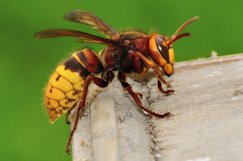 Животные и насекомые