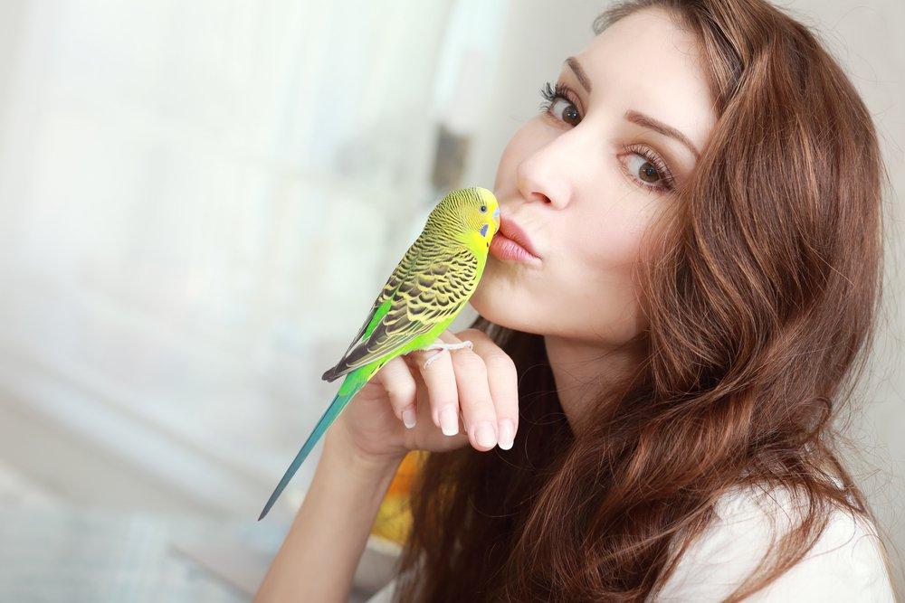 Аллергия на птиц: выявление и профилактика
