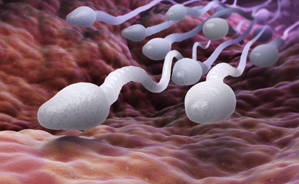 Как сперматозоиды проникают внутрь?