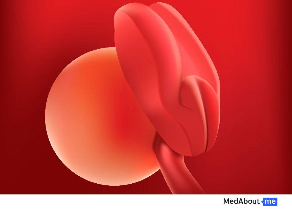 Развитие эмбриона на 3 неделе