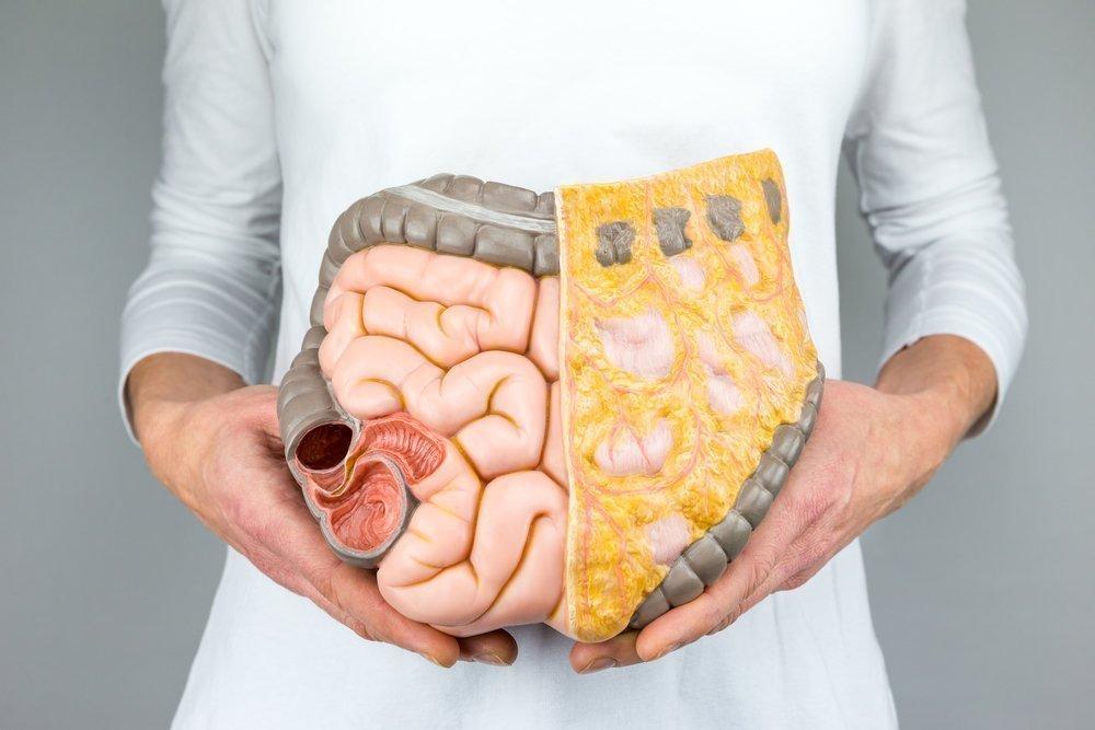 Энтерит: проявления острого или хронического воспаления