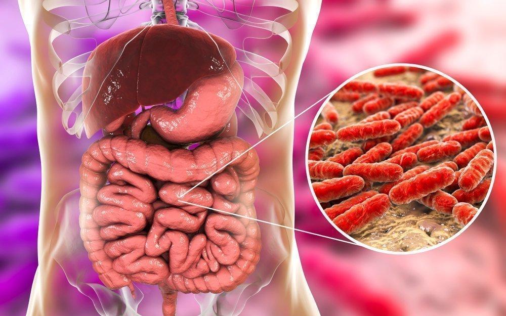 Метабиотики — новинка для поддержки полезных бактерий?