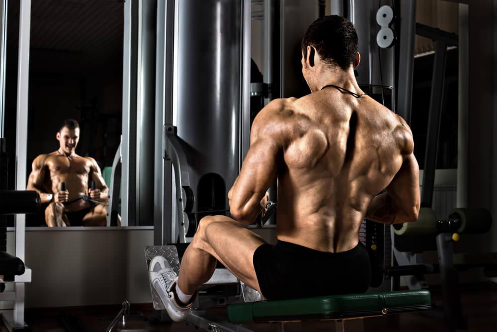 Анатомические особенности мышц кора