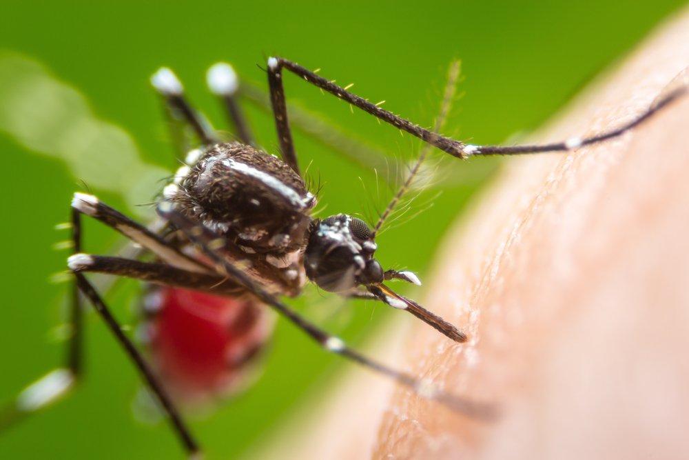 Виды малярии