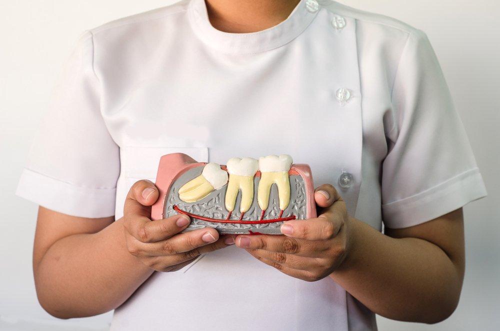 Уникальная группа зубов: историческая справка