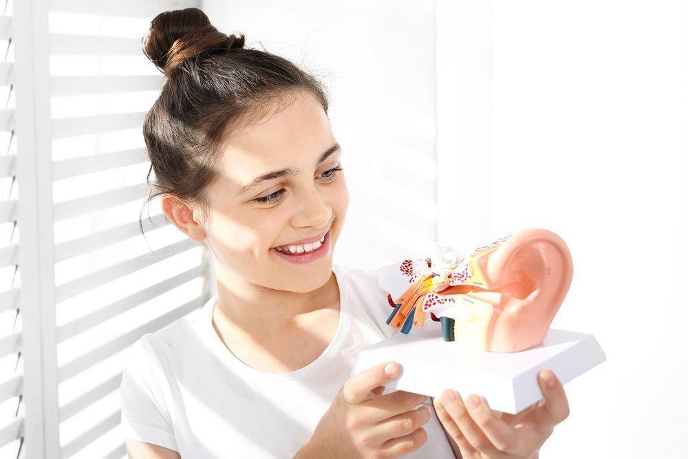 Как работает слух человека?