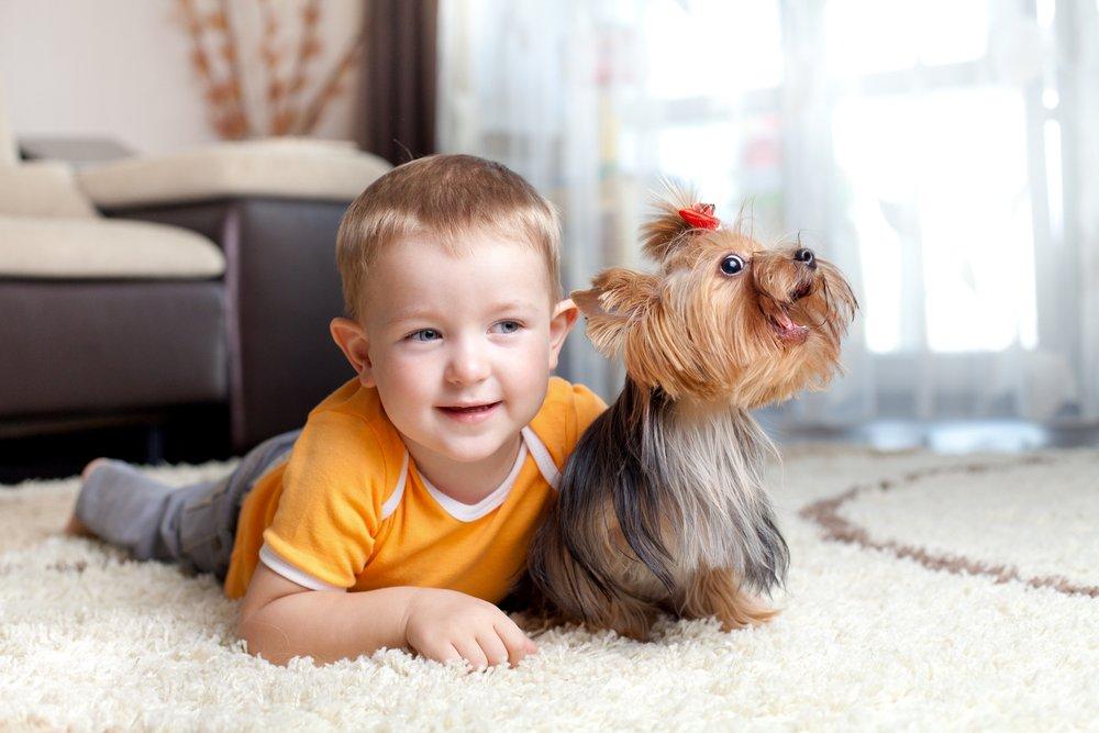 Что могут сделать дети для ухода за животными?