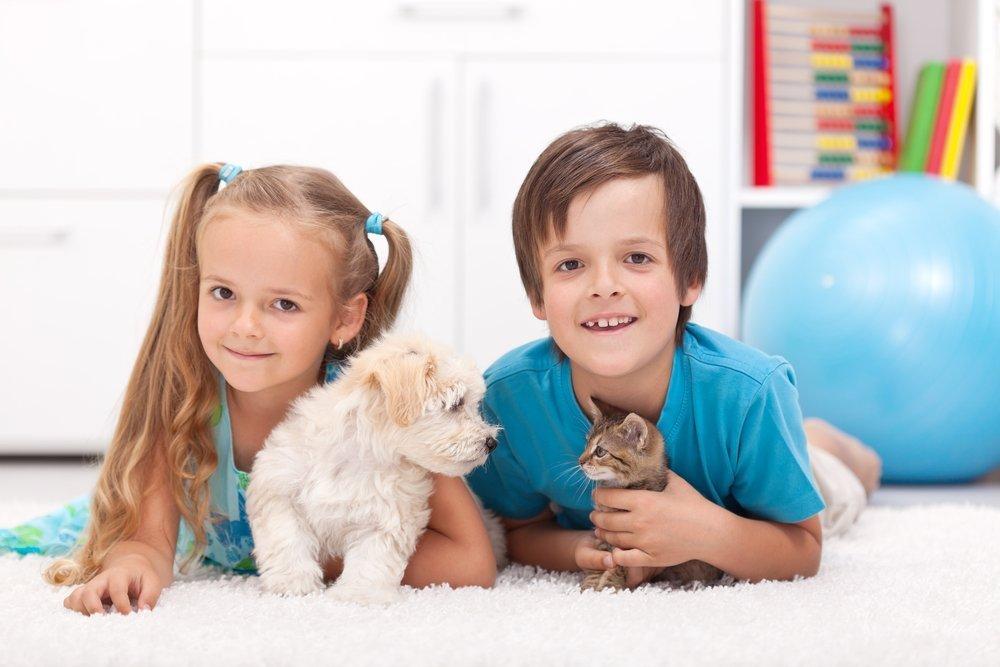 Занятия для детей при наличии живности в квартире