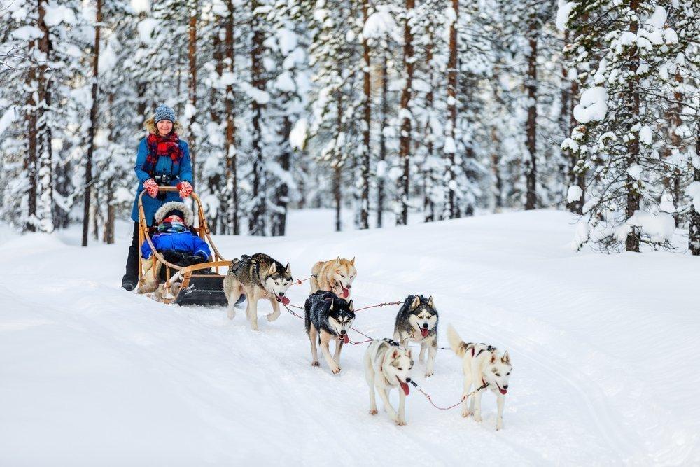 Катание на собаках: дети в восторге!