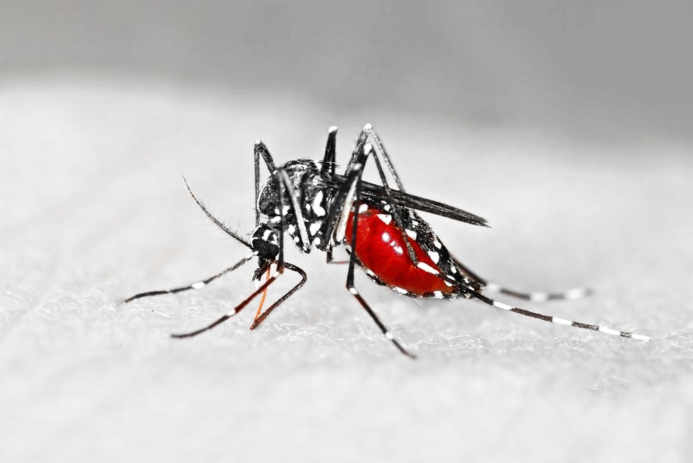 Риск заражения бактериями и паразитами