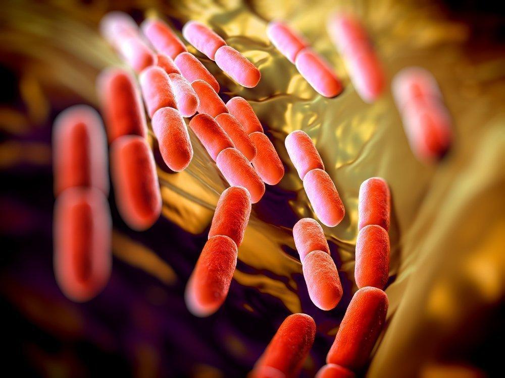 Какие бактерии и вирусы вызывают ОРЗ