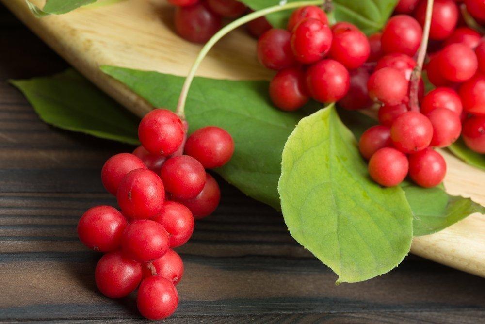 Растительные средства против усталости и депрессии