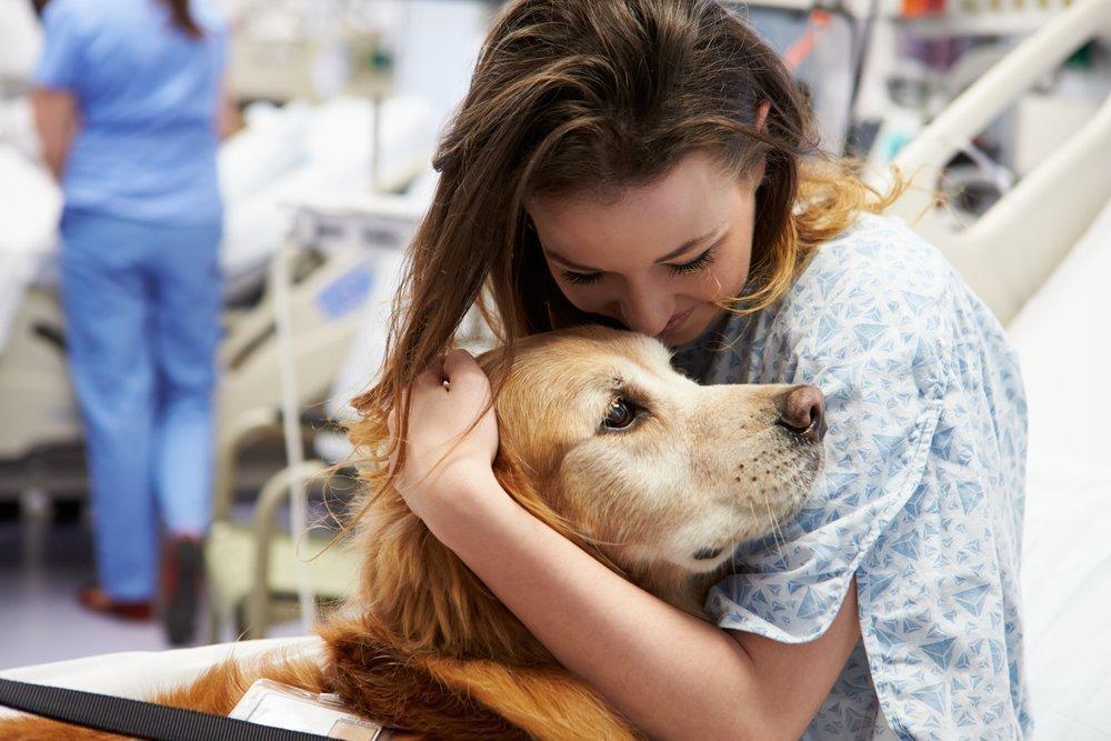 Собака-лекарь