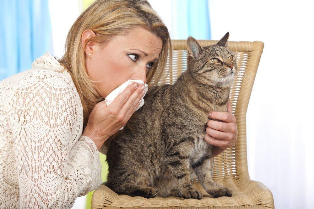 Клин клином: любовь к животным и симптомы аллергии