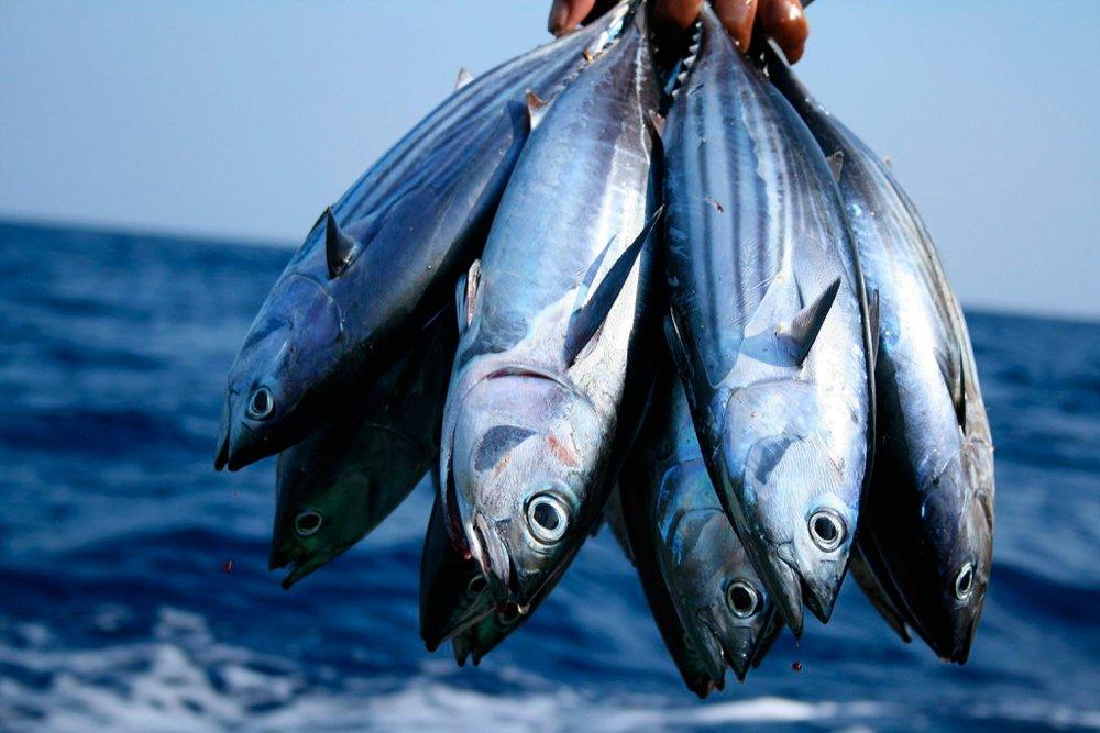 9. Атлантический голубой тунец Источник: mawmedia.com