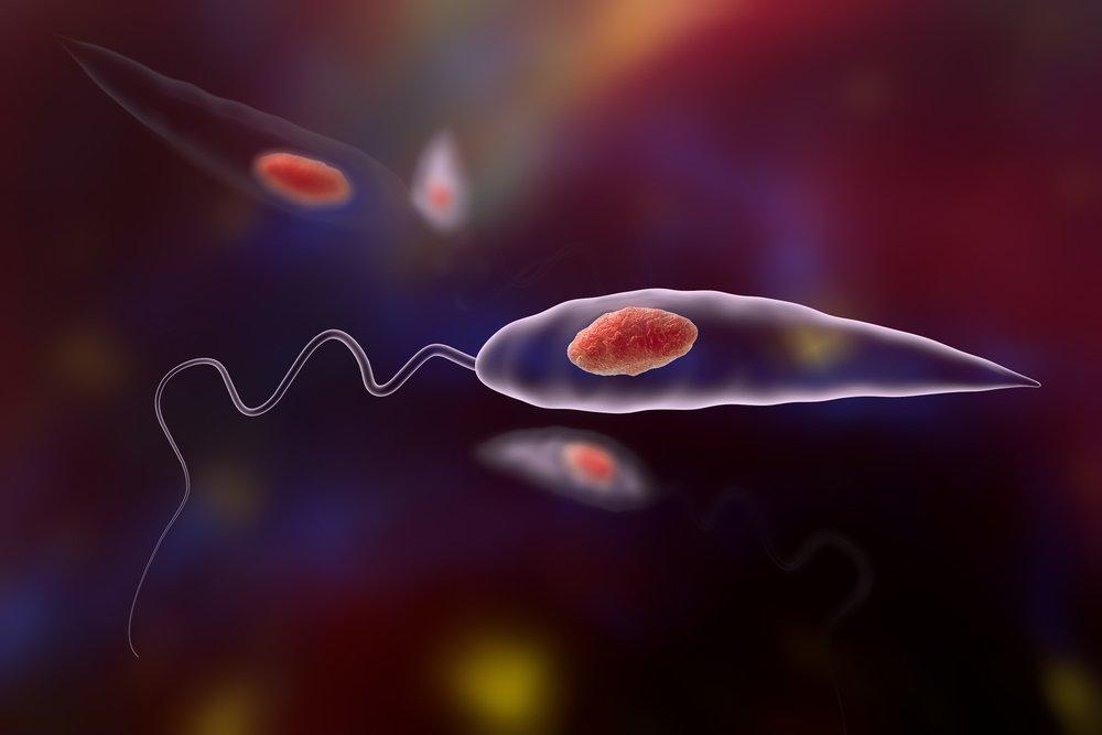 Виды паразитов и особенности заражения