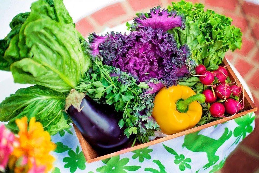 Правильное питание — залог молодости и здоровья