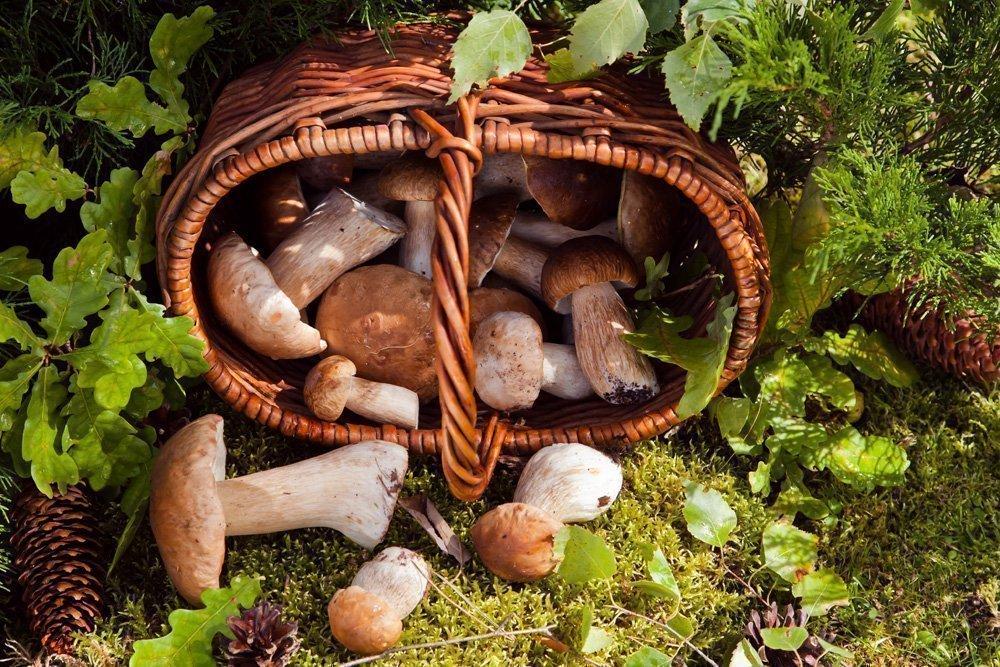 Правила сбора лесных грибов: профилактика проблем пищеварения