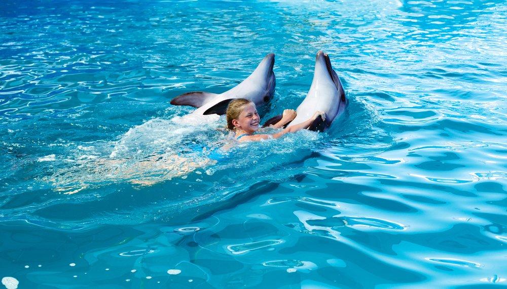 Положительные эмоции и другая польза плавания с дельфинами