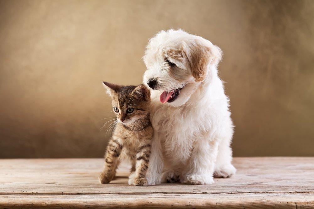 Поражения кожи при контактах с животными