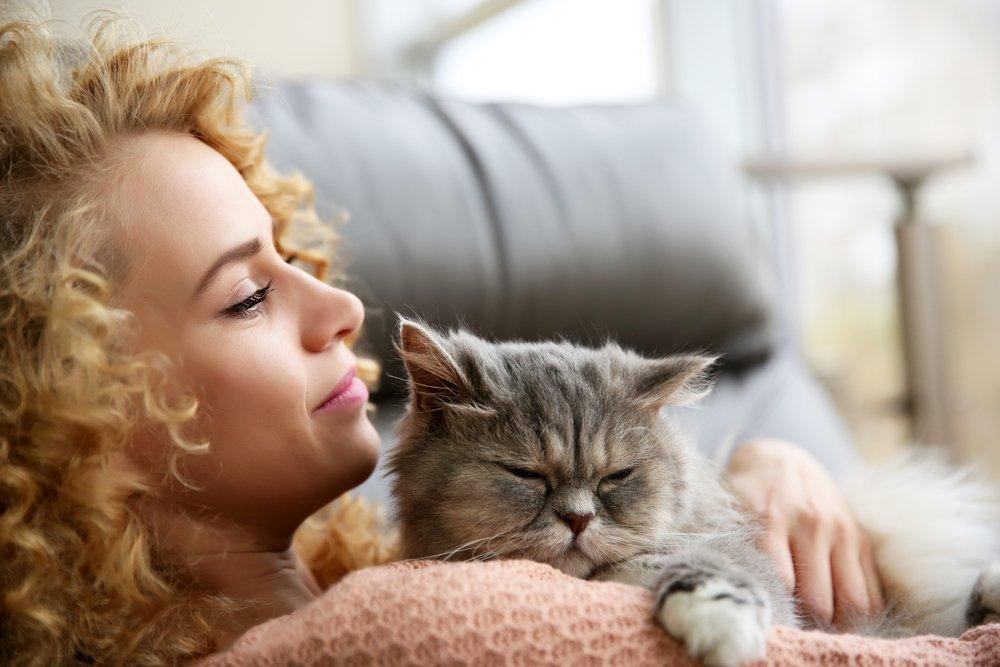 Кошки и психическая сфера: стрессы, депрессии