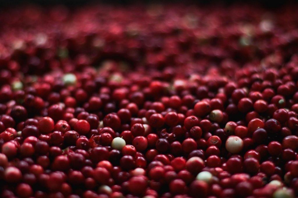 Клюква — еще одна осенняя ягода