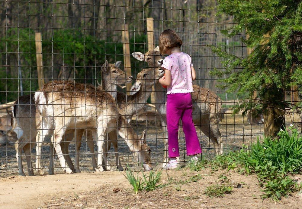 Ребенок и животные: развитие детей по возрасту