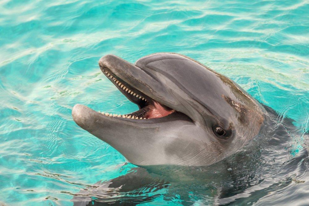 Опасности контакта дельфинов с детьми и полезные рекомендации