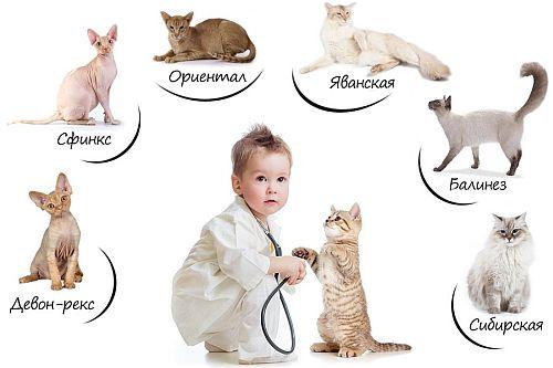 аллергия на животных.jpg
