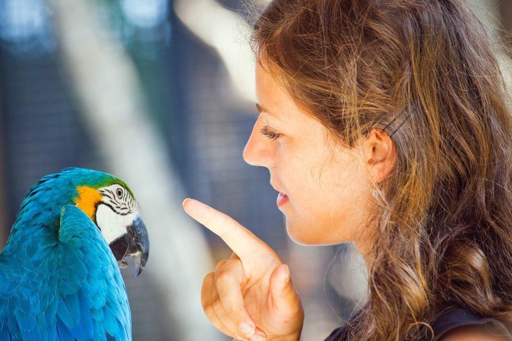 Чем птицы опасны для людей: аллергия, инфекции, паразиты
