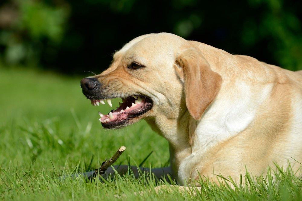 К чему может привести укус собаки, зараженной бешенством