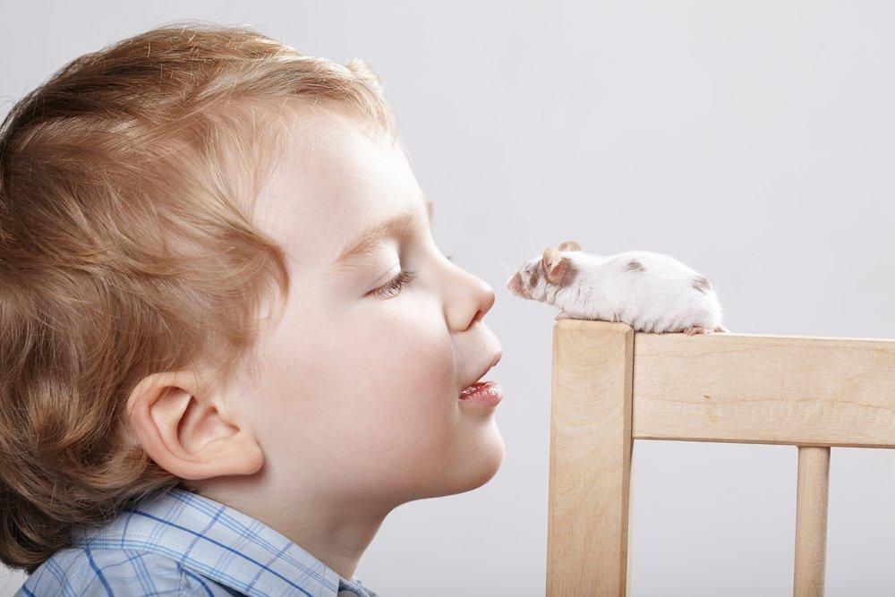 Как дети заражаются кишечным иерсиниозом?