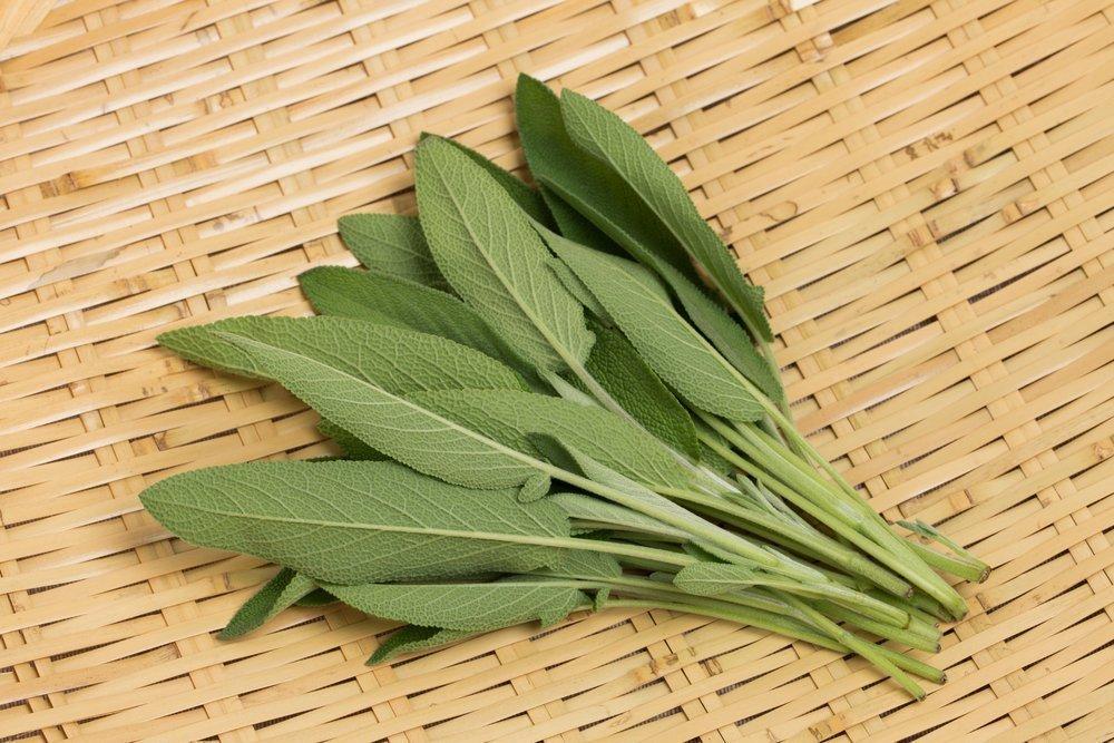 Шалфей — трава, оберегающая не только от болезней, но и улучшающая внешний вид