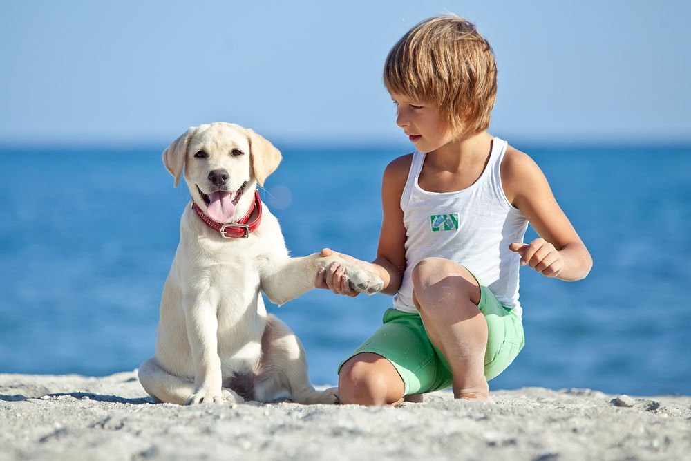 Почему собака лучше для ребенка, чем другие питомцы?