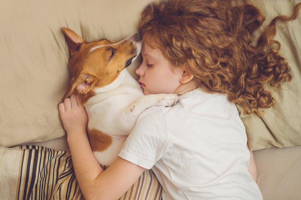 Сон с домашними питомцами: за или против?