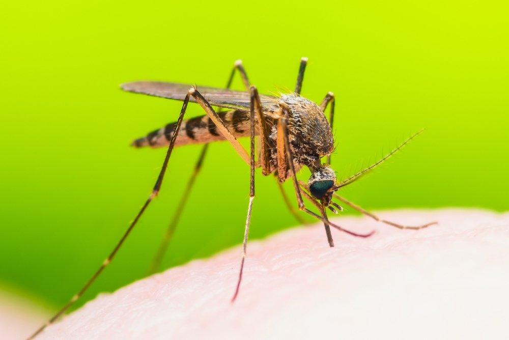 Комары: кровь и болезни