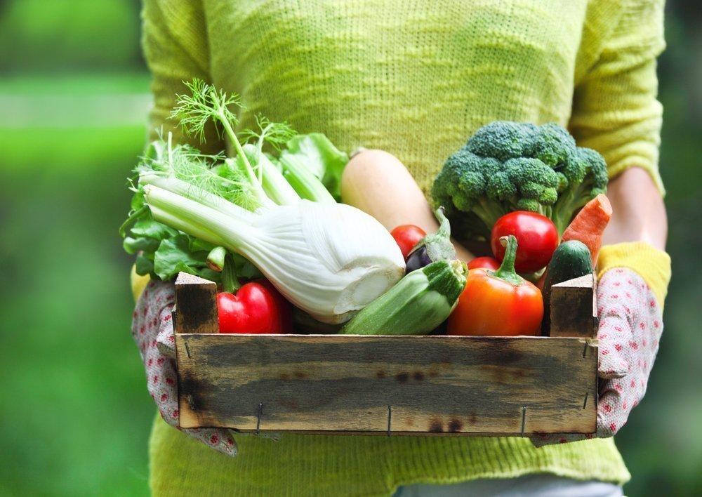 Особенности питания в летний период